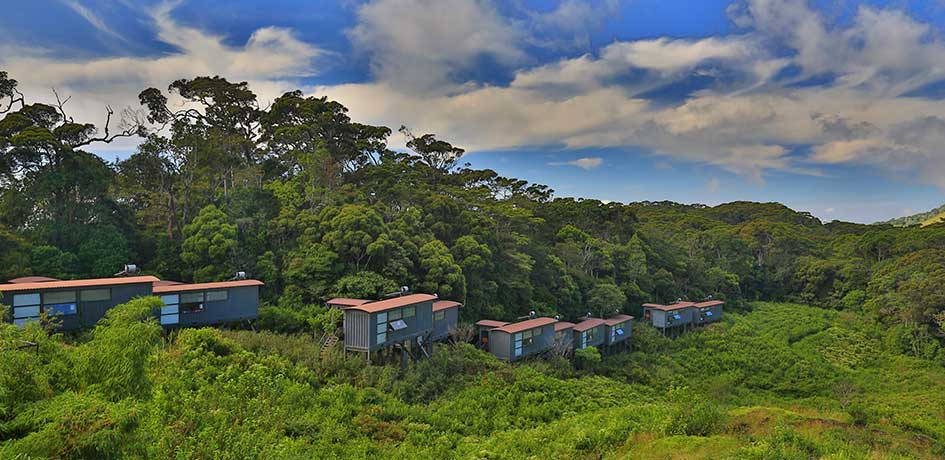 Photograph of the The Rainforest Eco Lodge and the surrounding forest