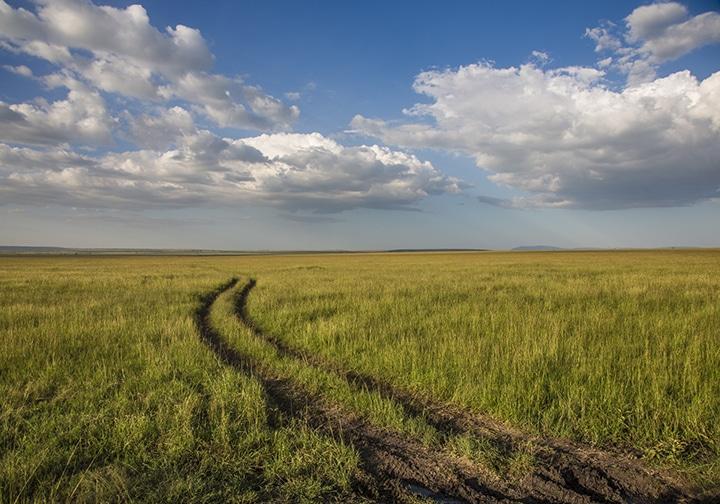 tire tracks in tall grasses, Maasai Mara