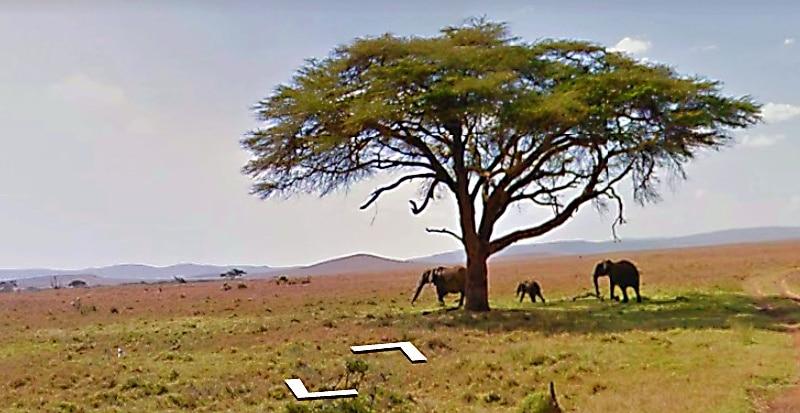 elephants in Samburu on street view