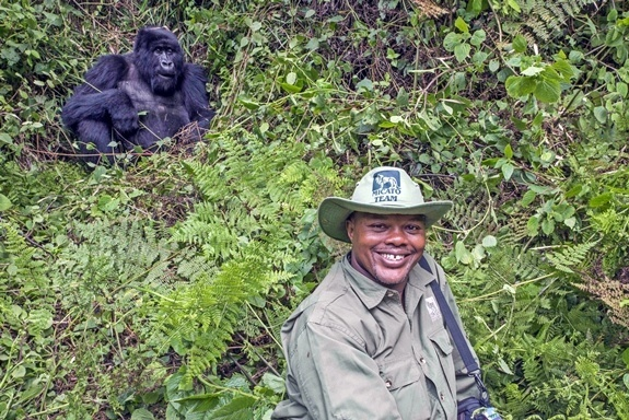 A Micato team member poses with a gorilla