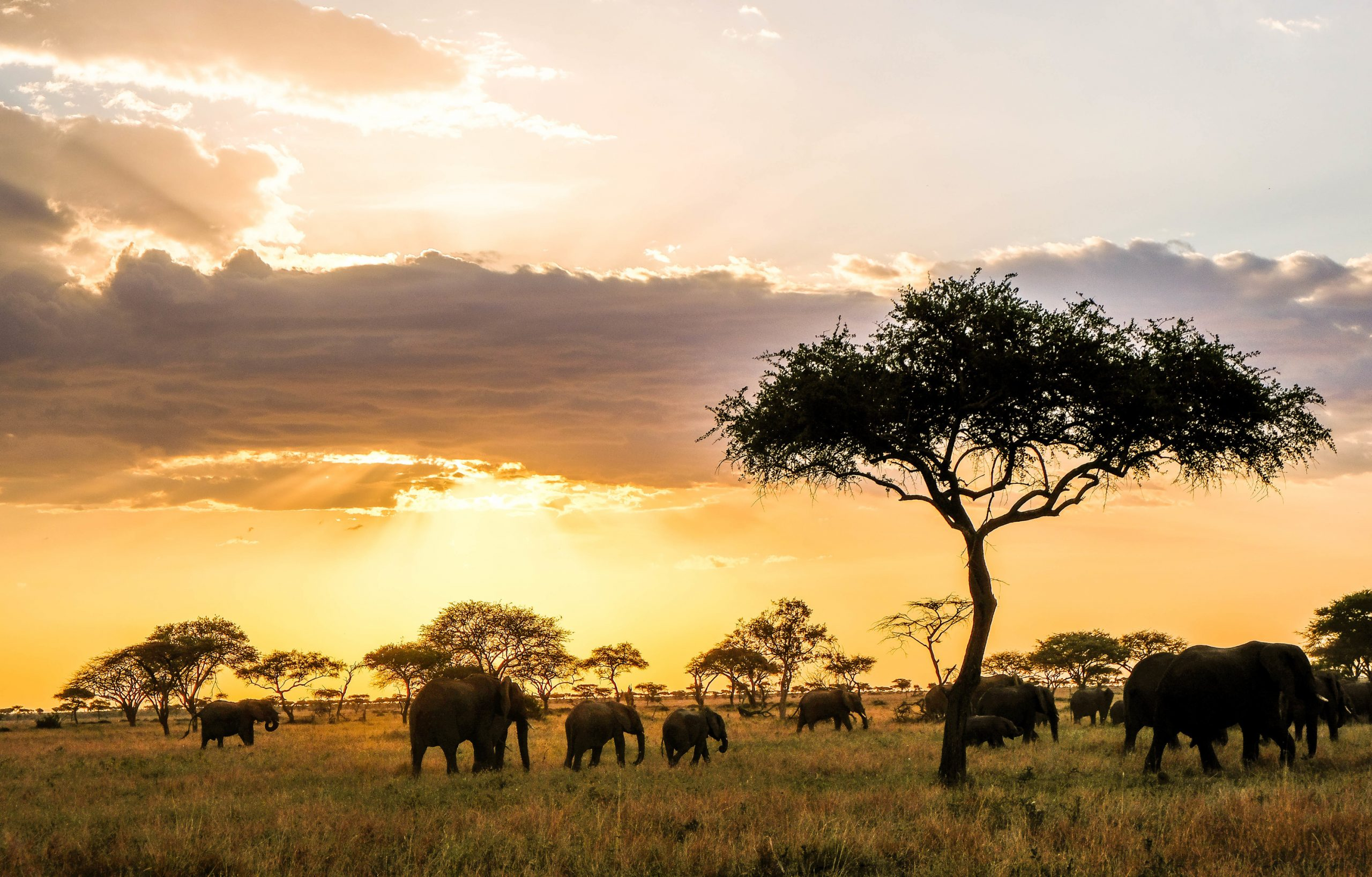 A group of elephants in the wild at sunset