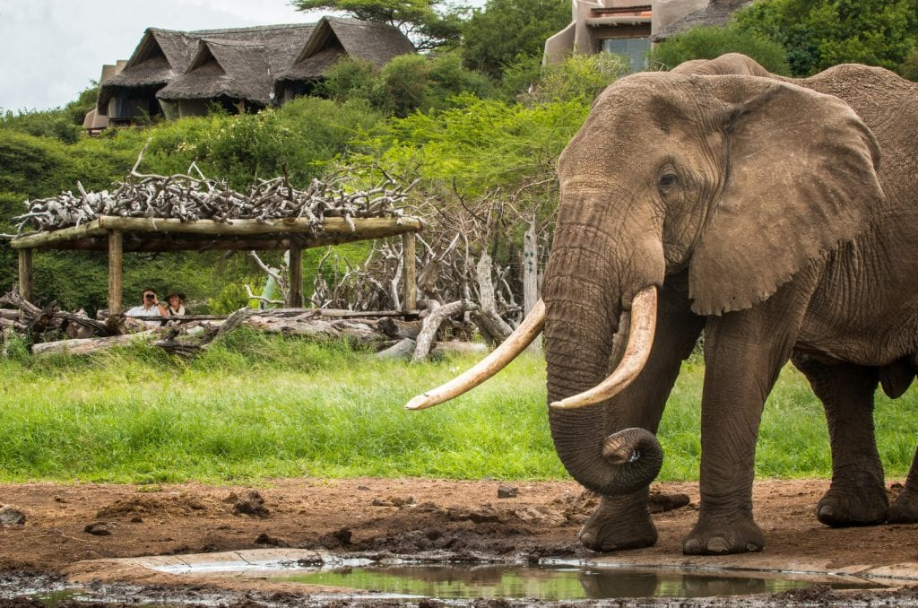 ol donyo lodge watering hole with elephant