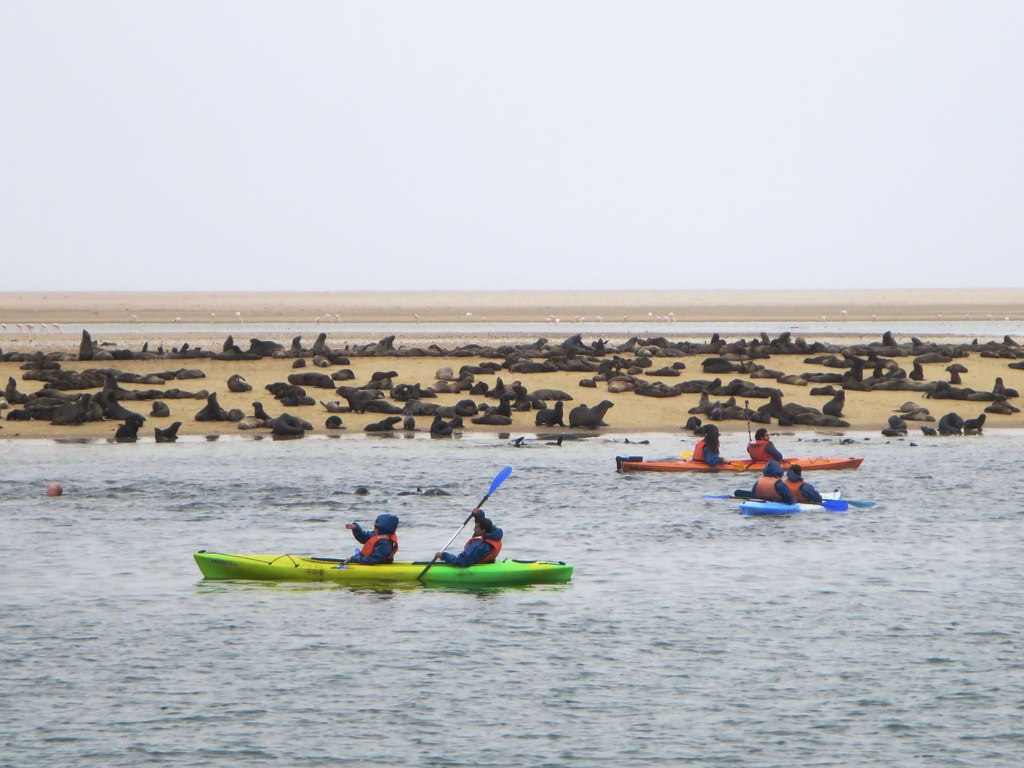 Seals on a beach with kayakers rowing next to them