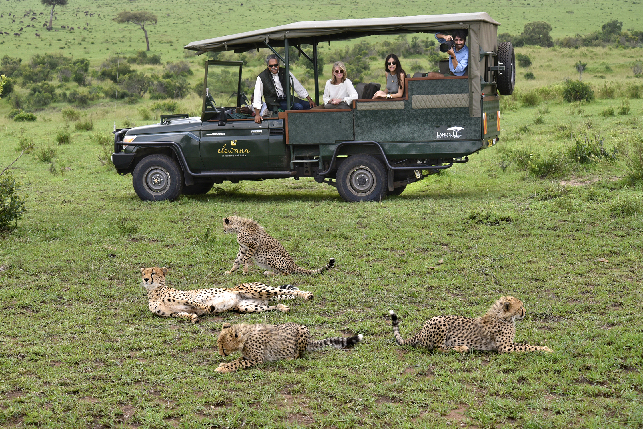 The Pintos view leopards from a car