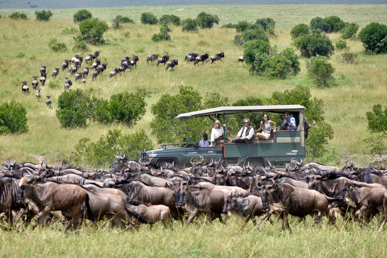 The Pintos watching a herd of wildebeest