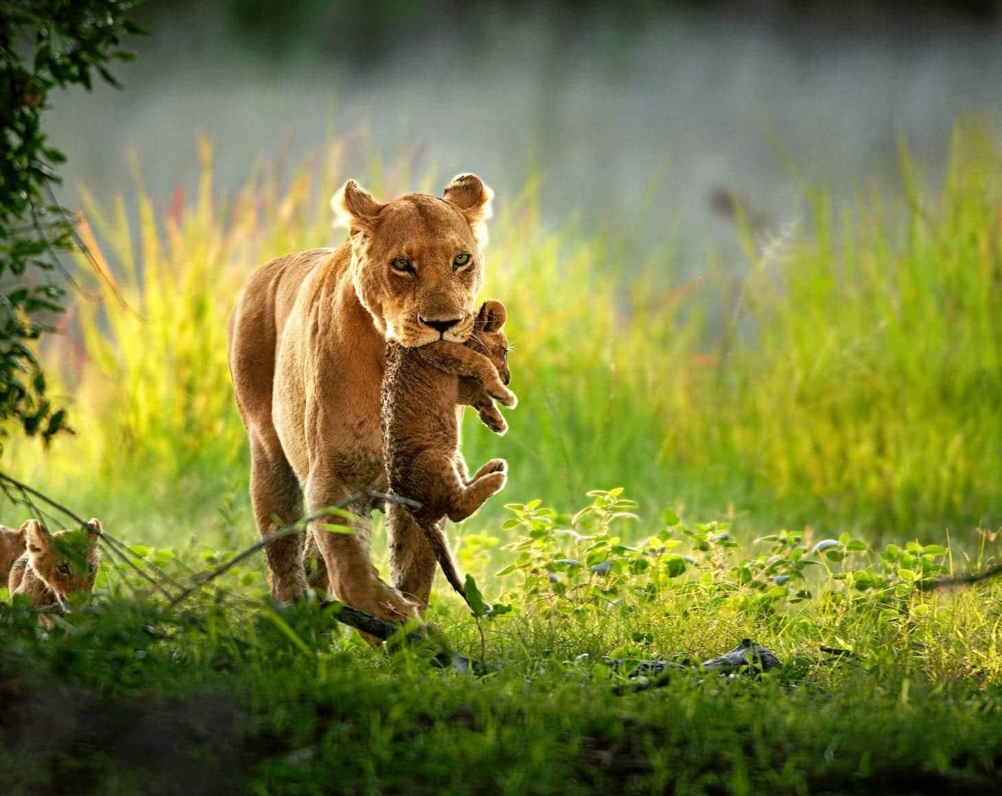 An African Safari's Most Wonderful Gifts
