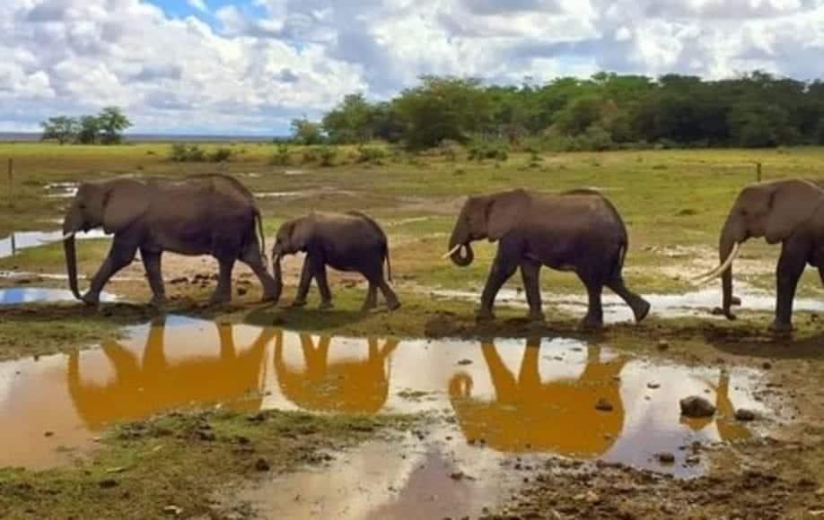 Elephant walk in Amboseli
