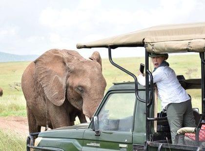 a tourist taking a photo of an elephant