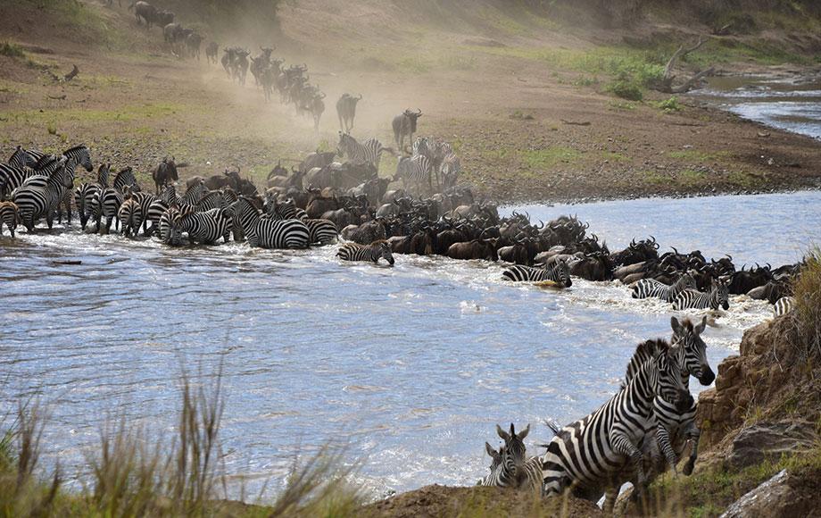 a row of elephants in water