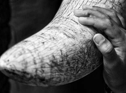 a hand touching an elephant tusk