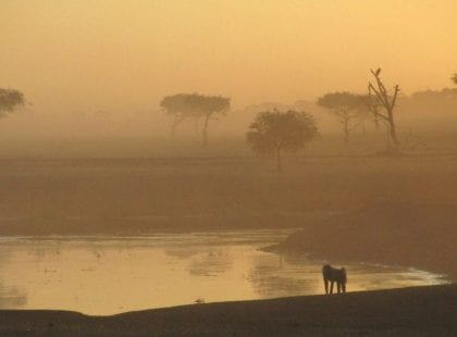 a baboon staring at a body of water