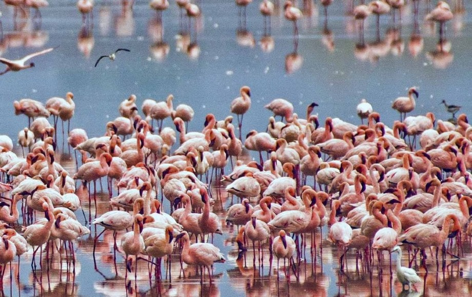 a group of flamingos in water