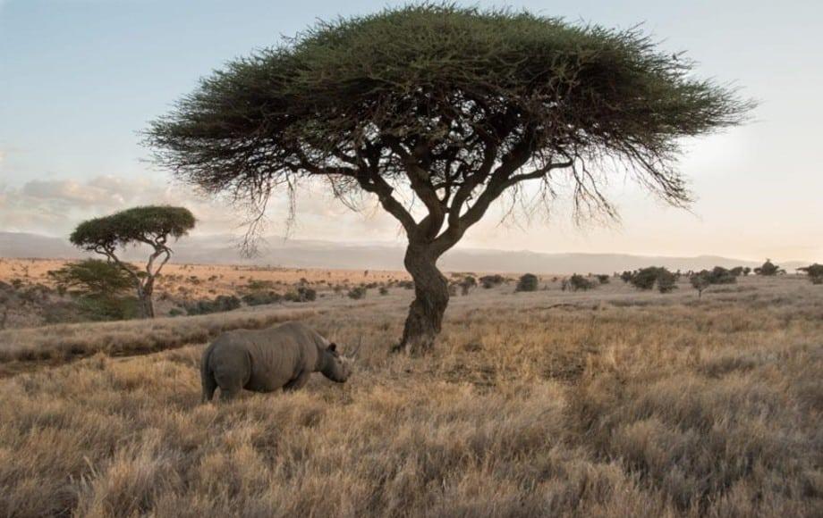 a rhino near a tree