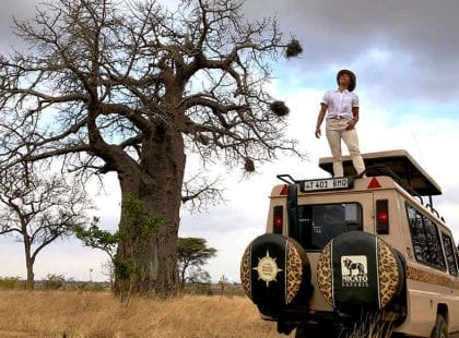 A guide standing on top of a jeep looking at a tree