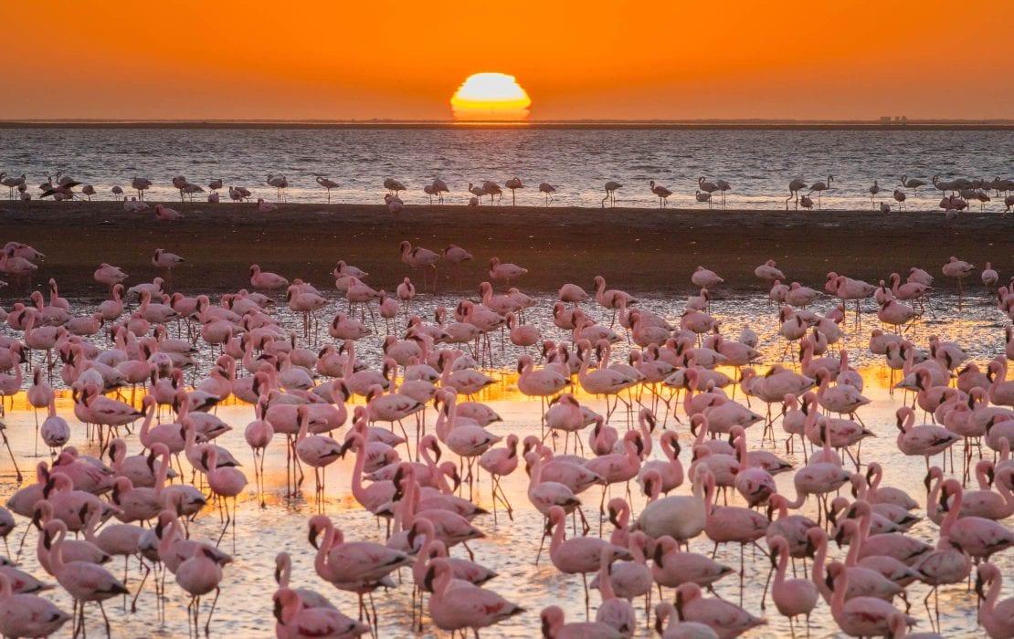 Flamingos at Swakopmund