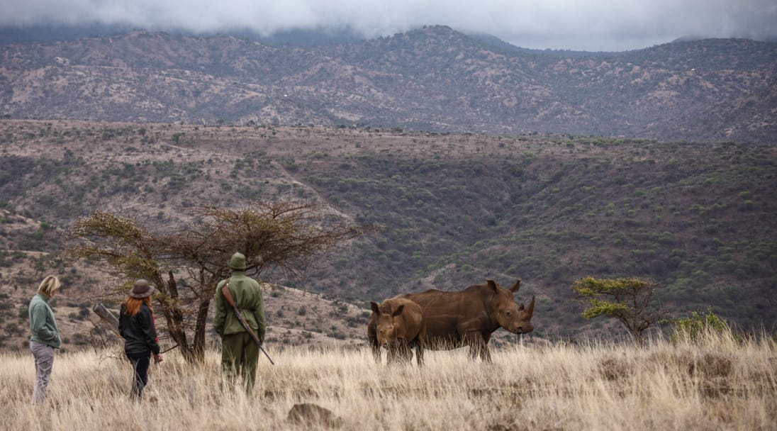 Watching Rhino during African Safari