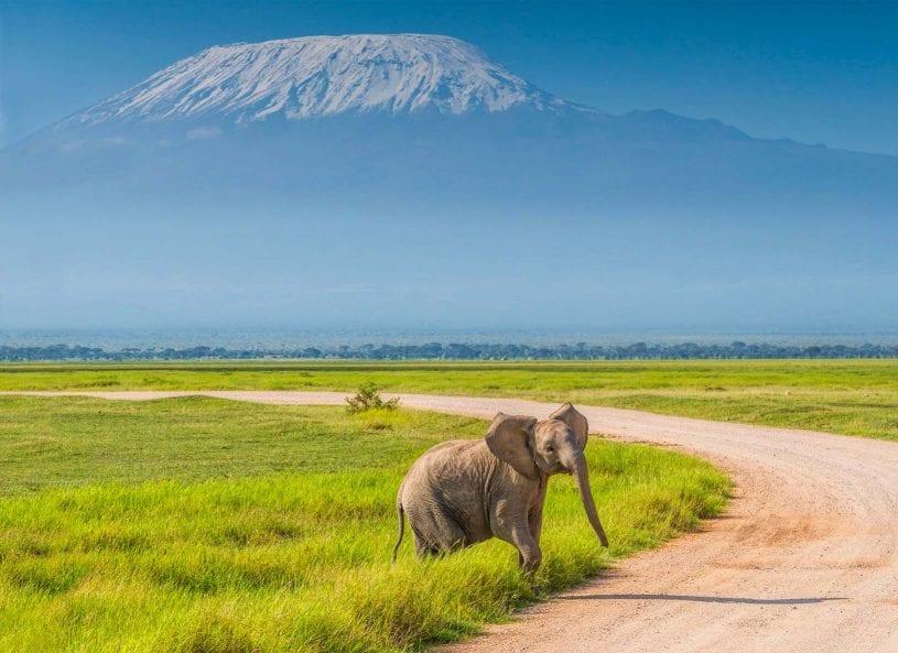Amboseli National Park, southern Kenya