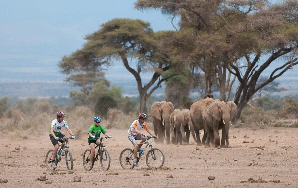 Three people biking near elephants