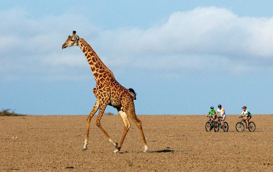 Riding bicycles alongside roaming giraffe at Chyulu Hills