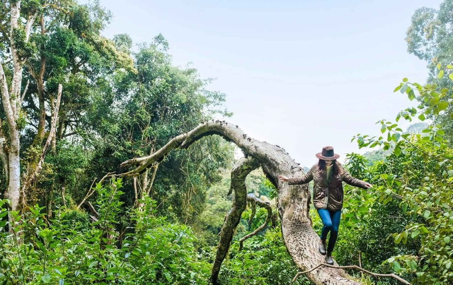 Woman walking down a jungle tree at Chyulu Hills in Africa