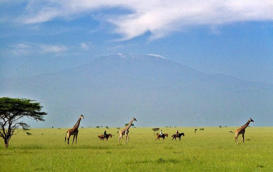 Horseback riding alongside wild giraffes at Chyulu Hills
