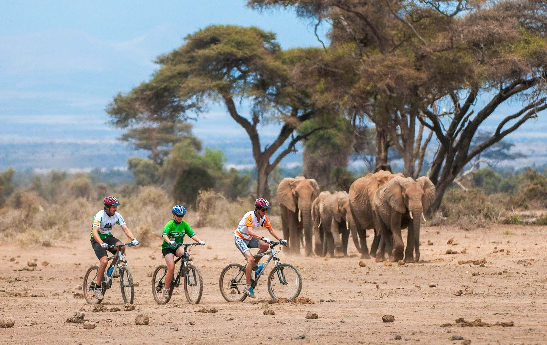Riding bicycles alongside family of elephants at Chyulu Hills