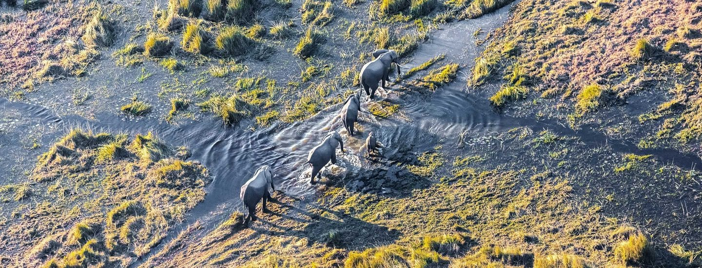 Aerial view of elephants in Africa