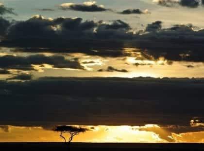 the savannah at sunset