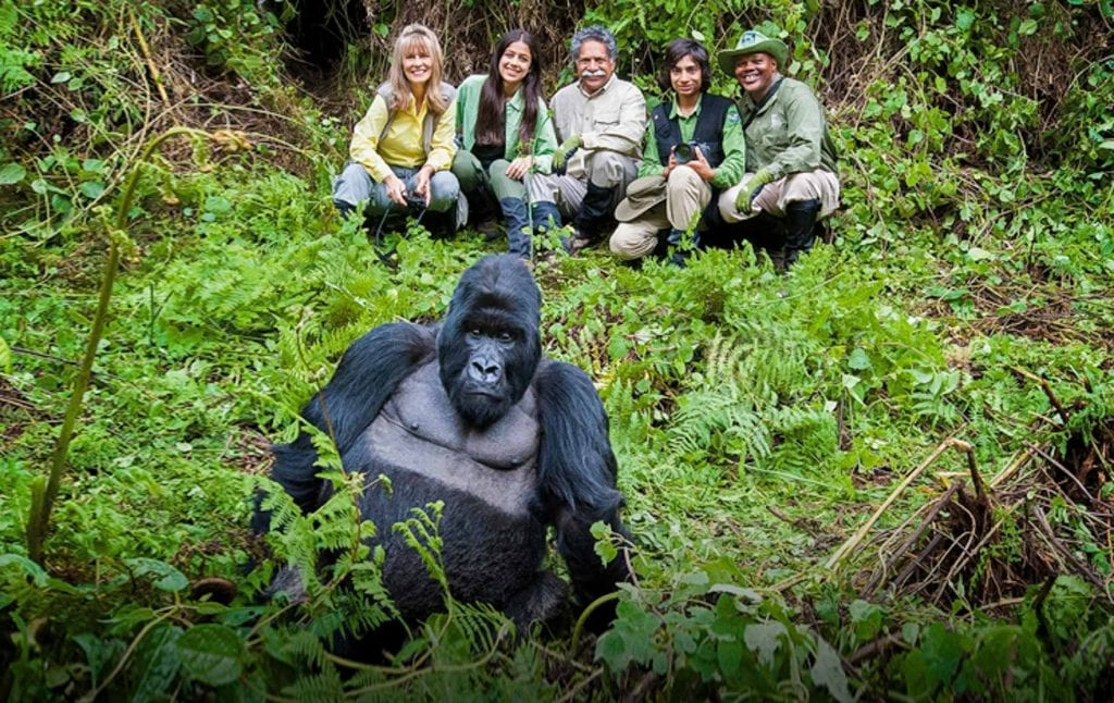 Gorialla Tracking