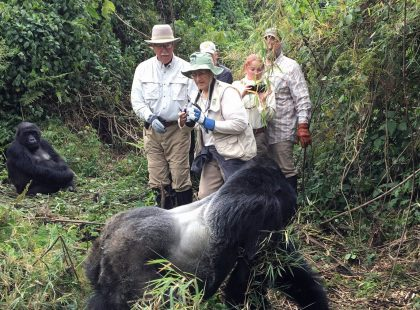 tourists with a group of gorillas