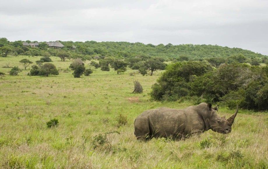 Hippopotamus at KwaZulu-Natal