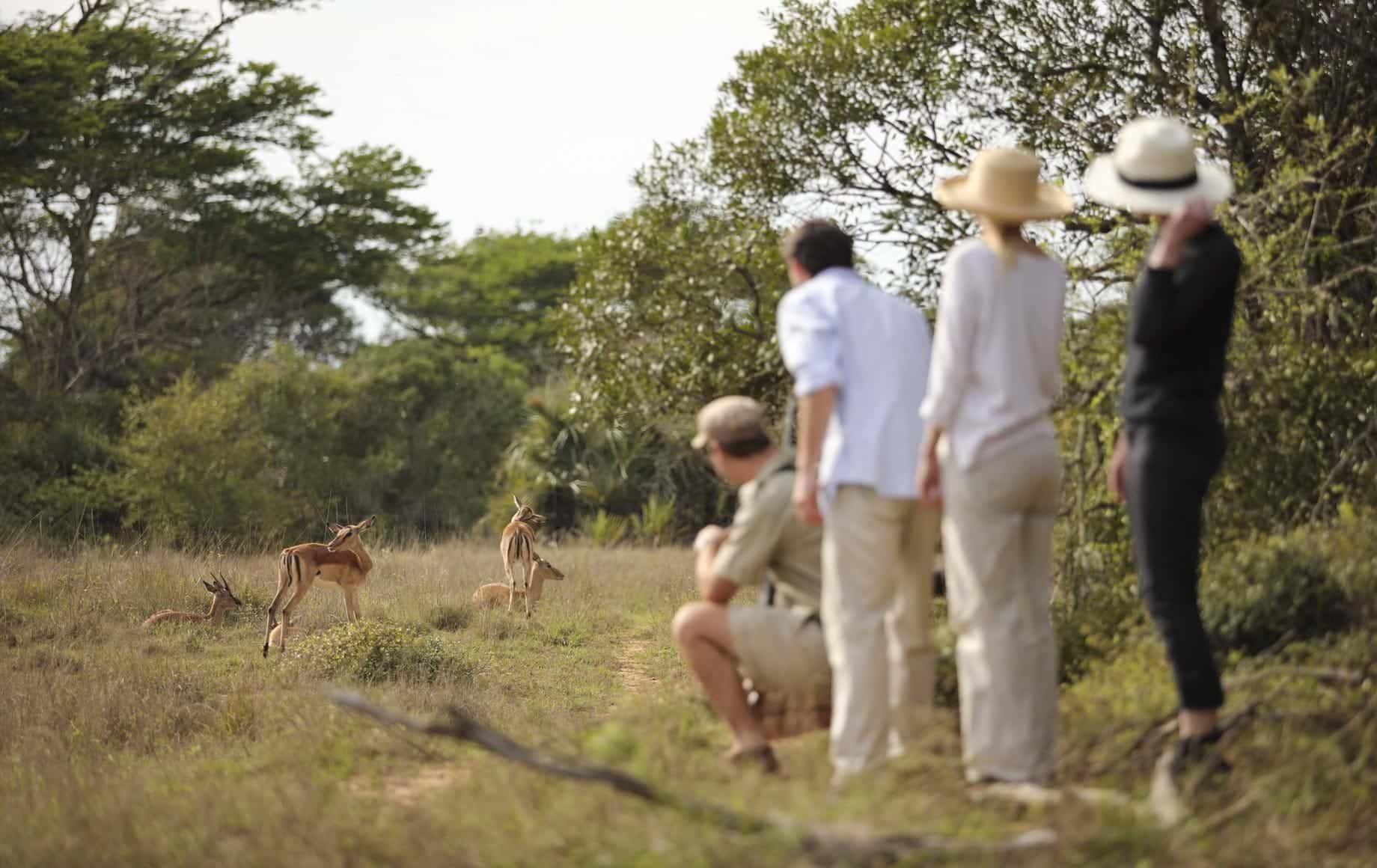 Watching deer cubs at KwaZulu-Natal