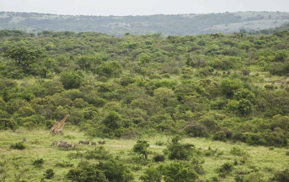 Wildlife at KwaZulu-Natal