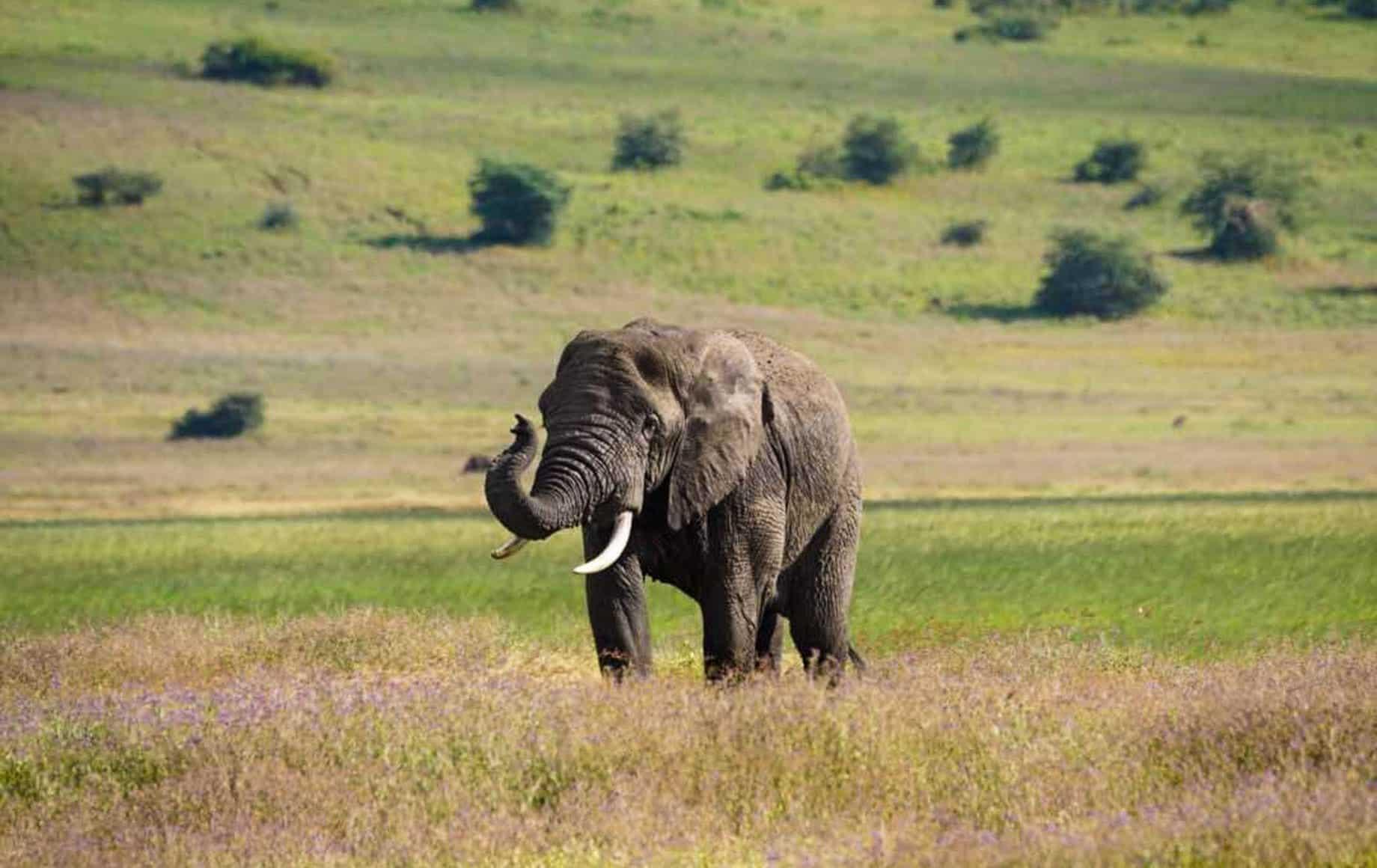 Elephant roaming around Lake Manyara National Park