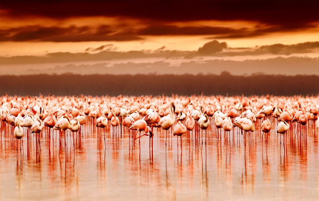 Flamingos on Lake Nakuru and Lake Naivasha