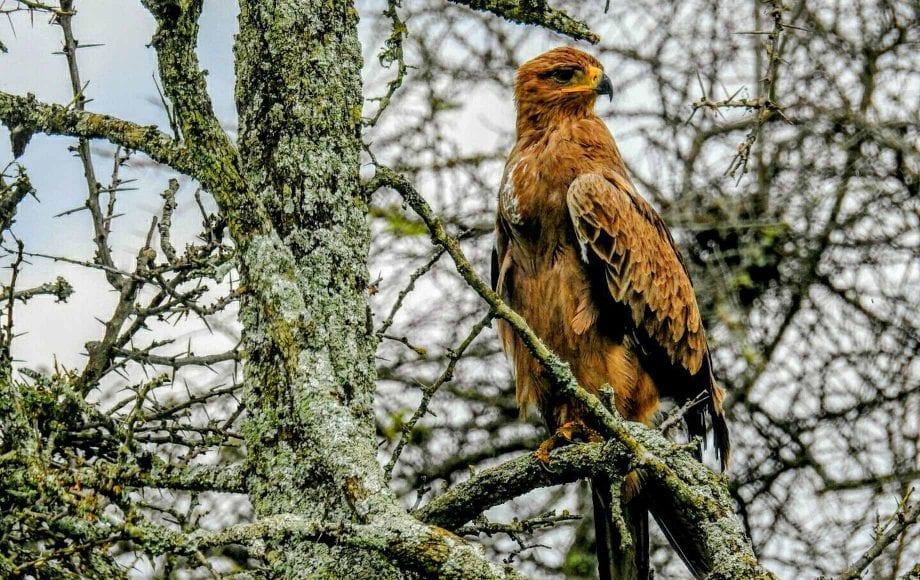 Lake Nakuru National Park - A Haven for Kenya Birds