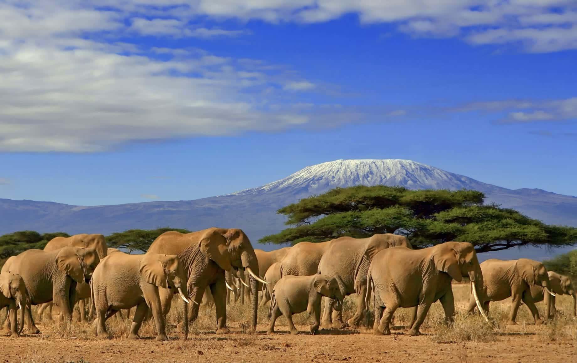 Elephant in Masai Mara, Kenya