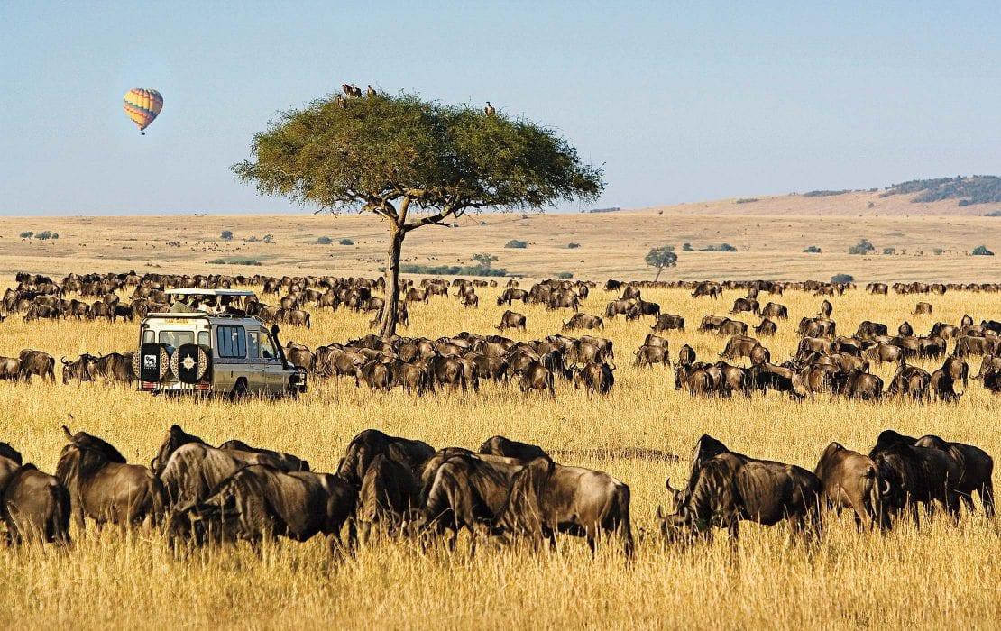 Wildlife at The Maasai Mara Game Reserves