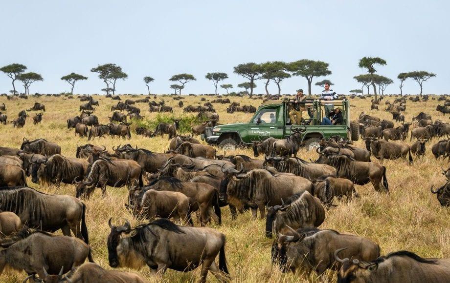 Wildlife in the Maasai Mara