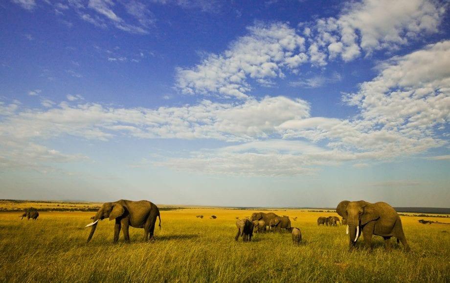 Wildlife at Maasai Mara
