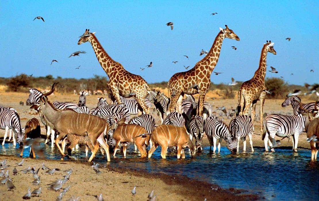 Wildlife at Madikwe Game Reserve
