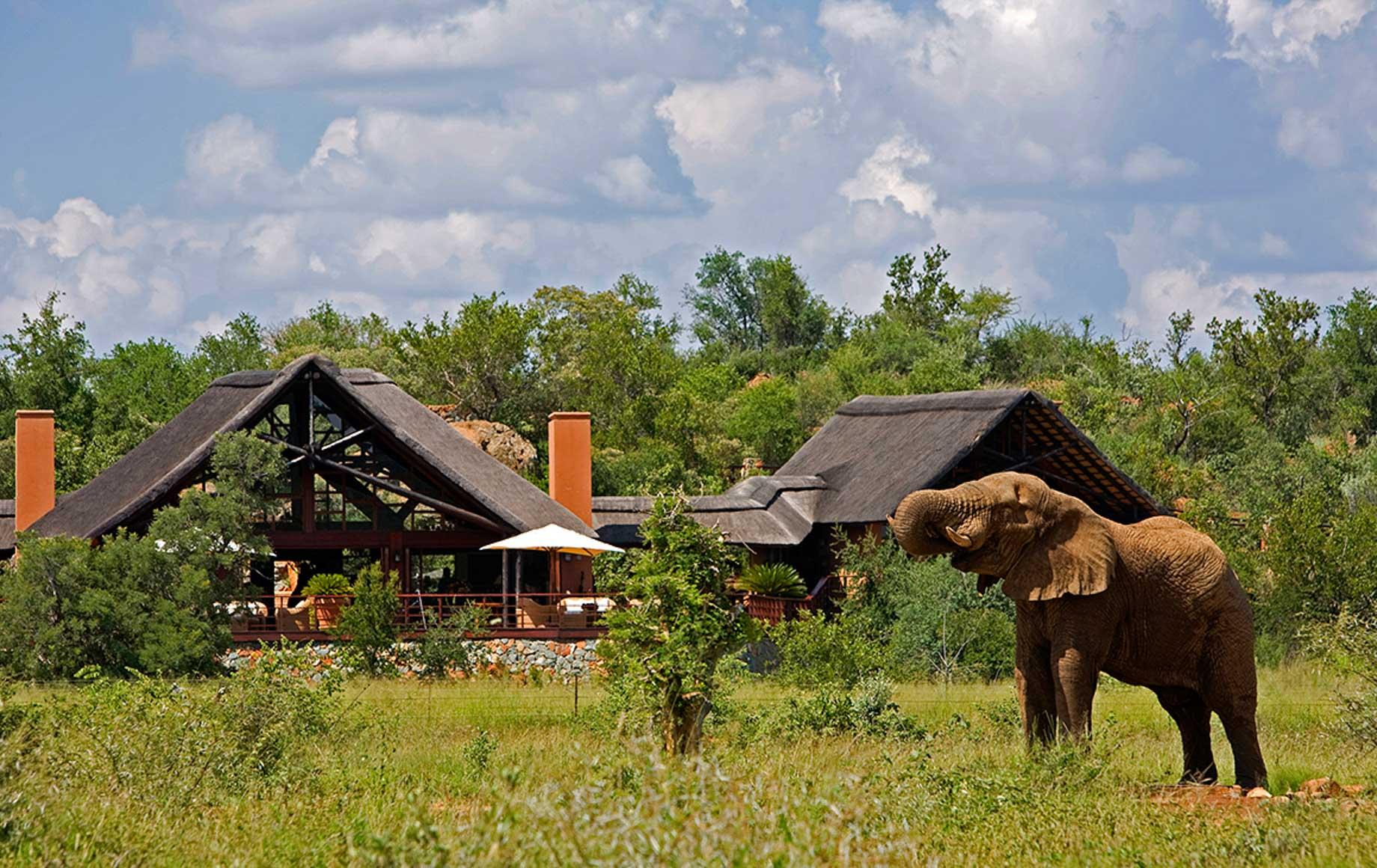 Elephant at Madikwe Game Reserve