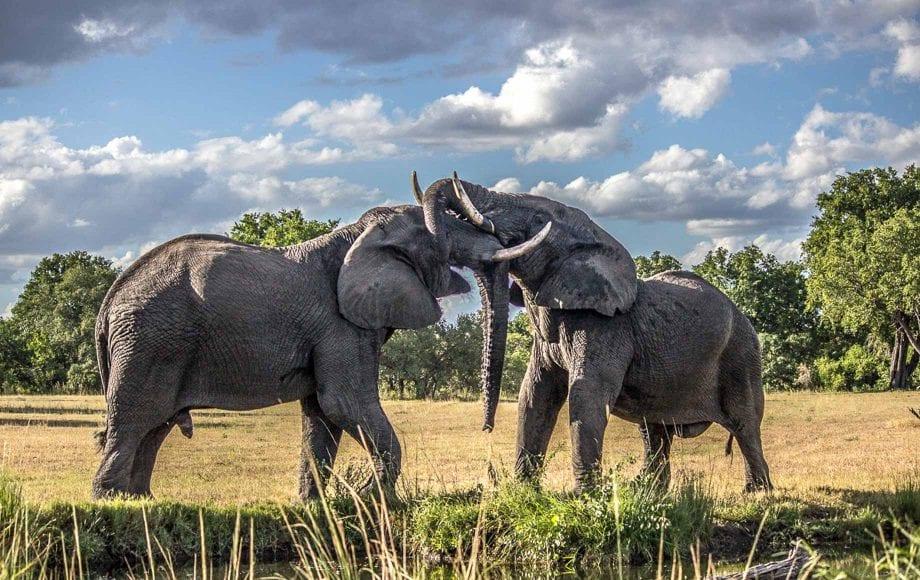 Meet an Elephant