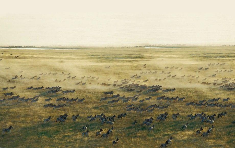 Wildlife in the Makgadikgadi Pan