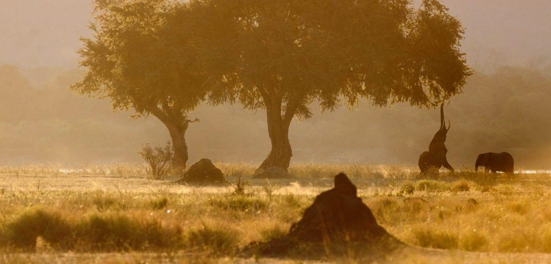 African Splendour