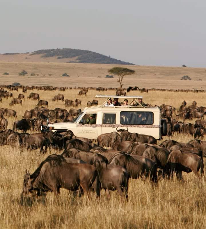 Watching wildlife during Safari