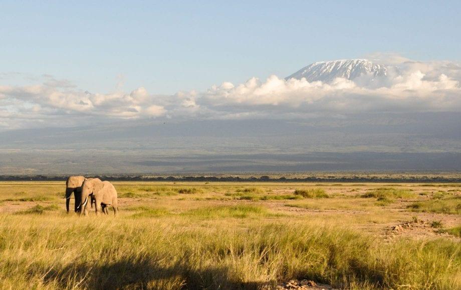 Elephants at Mount Kilimanjaro Climb