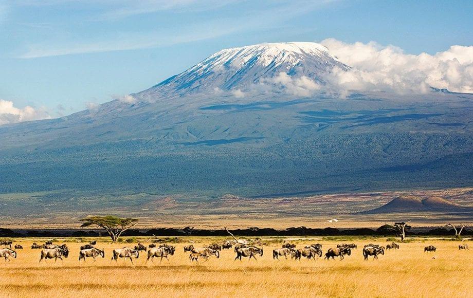 Wildlife at Mount Kilimanjaro Climb