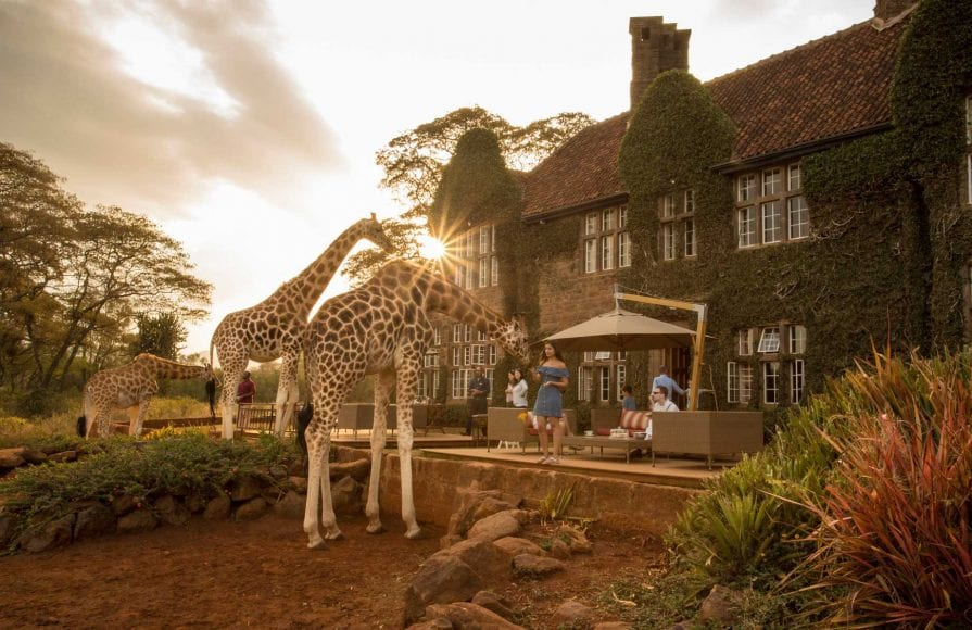 Hand feeding giraffes at the Nairobi