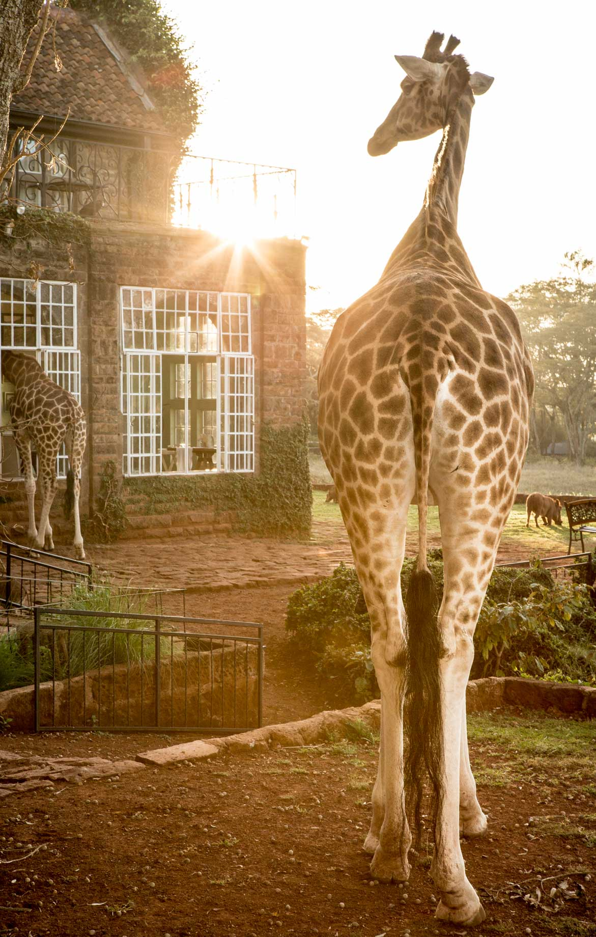 Staying at Giraffe Manor really worth the cost